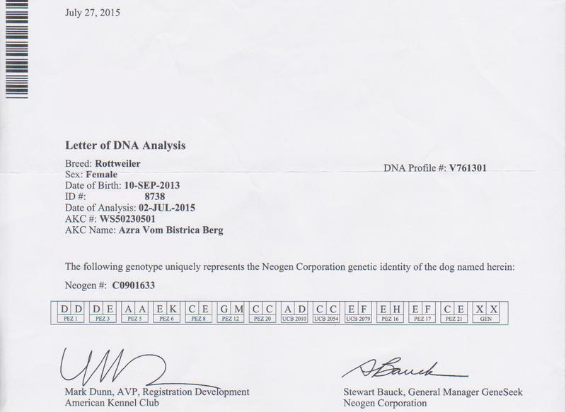 Azra vom Bistrica Berg DNA Testing