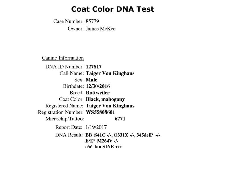 Taiger Vom Kinghaus Coat-Color-DNA-Test