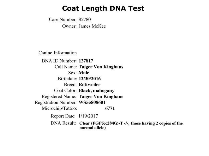 Taiger Vom Kinghaus Coat-Length-DNA-Test