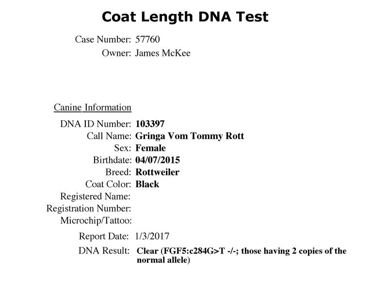 Gringa Vom Tommy Rott Longcoat Testing