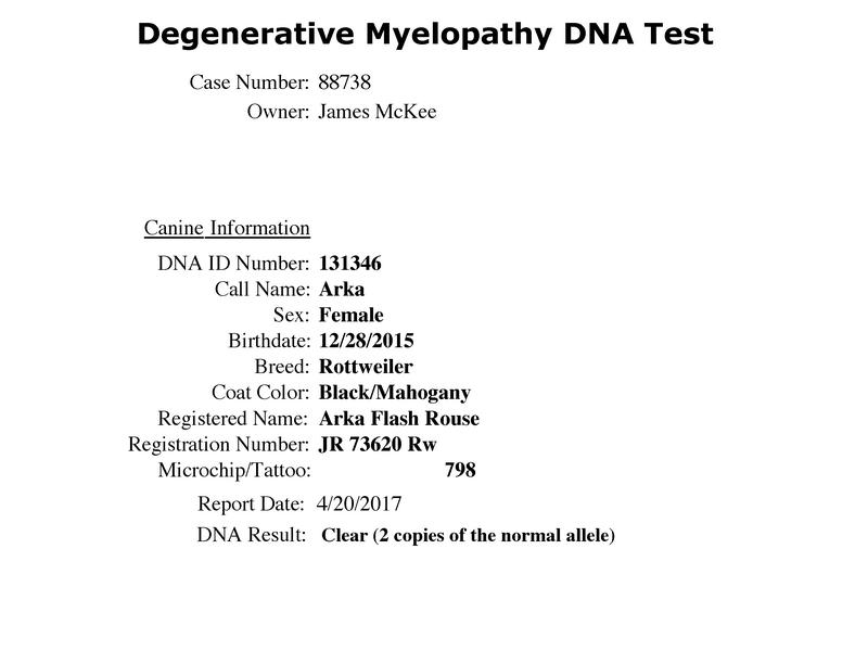 Arka Flash Rouse Degenerative-Myelopathy