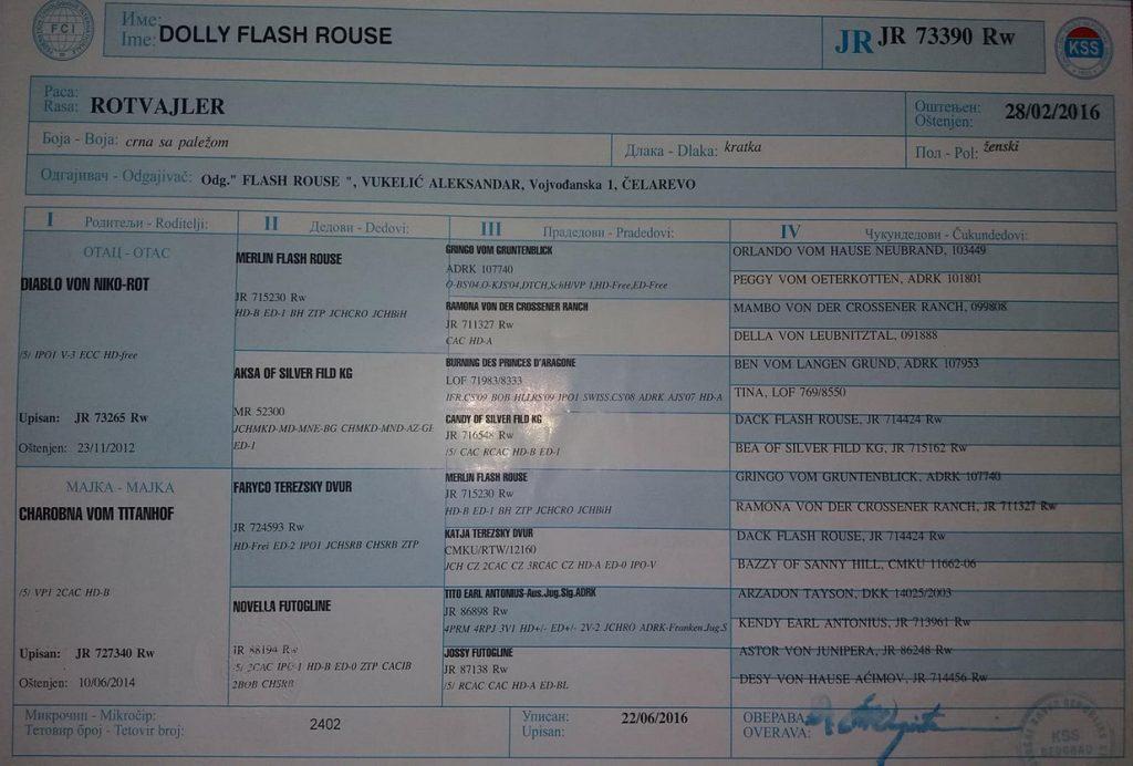 Dolly Flash Rouse Pedigree